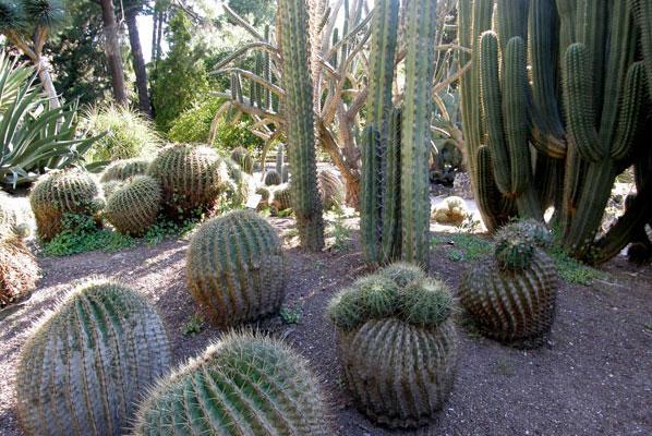 Jardin botanique les cactus